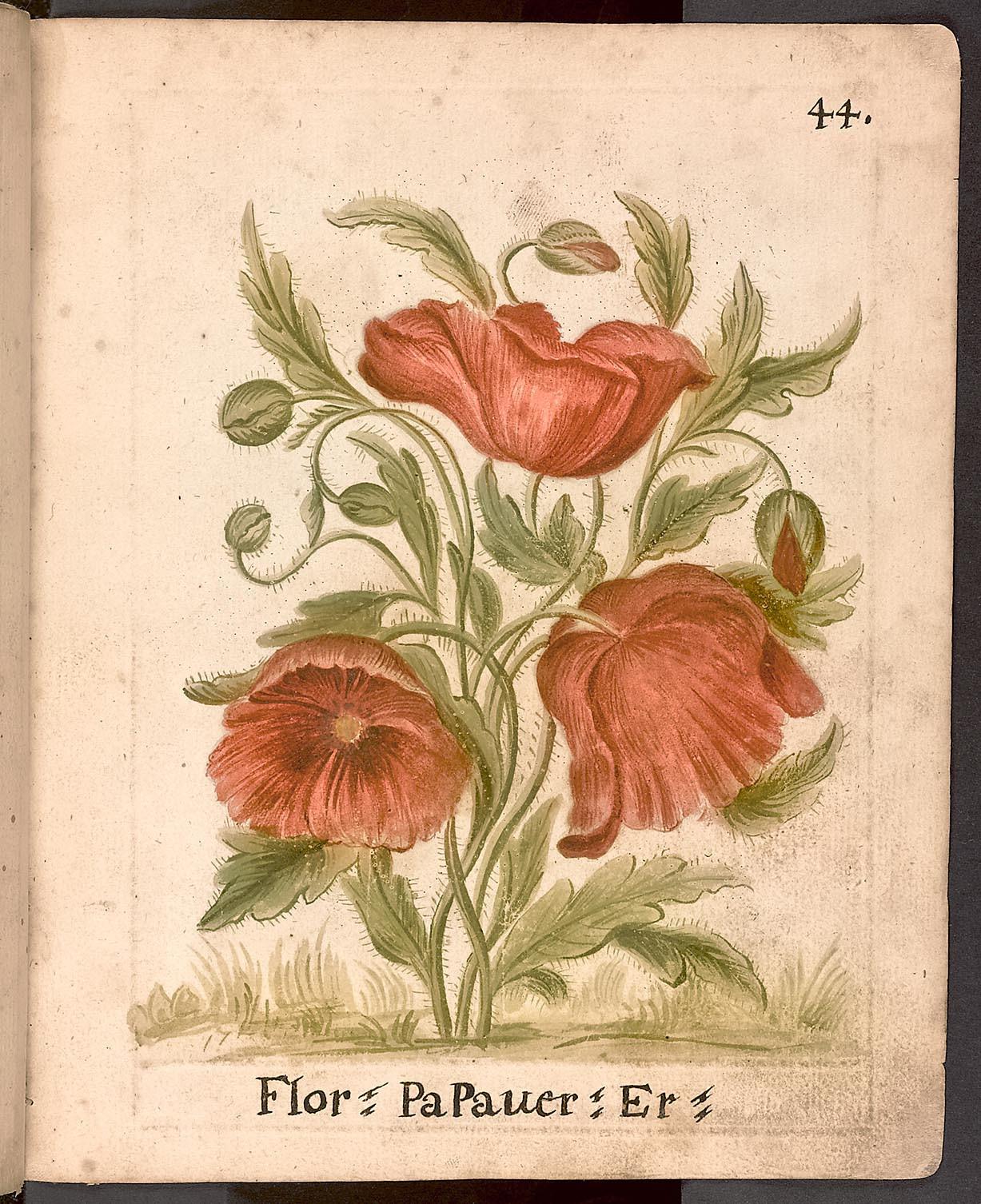 Lékařsko-farmaceuticky zaměřený herbář